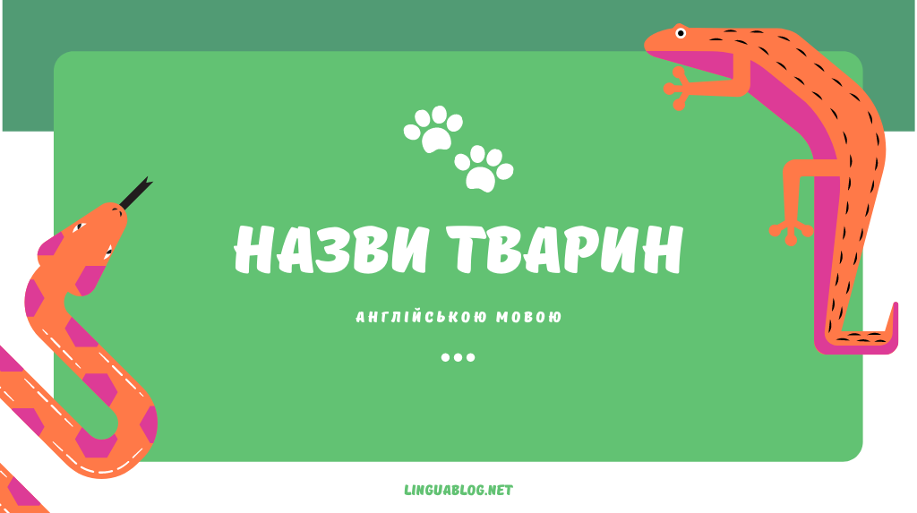 You are currently viewing Назви тварин англійською мовою